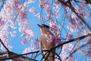 a picture of a bird in a tree with beautiful flowers.